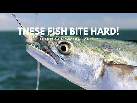 These Fish Bite Hard!- Fly Fishing for Spanish Mackerel