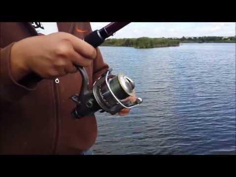 черный амур в трофейной рыбалке