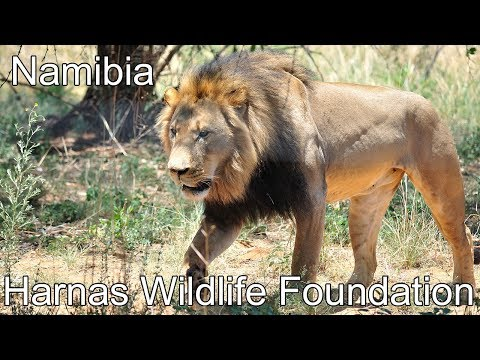 Harnas Wildlife Foundation in Nov. 2017, Namibia