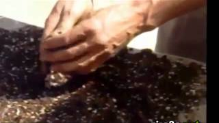 زراعة (تشتيل) البذور