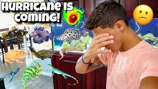 preparing-for-hurricane-dorian-saving-my-animals