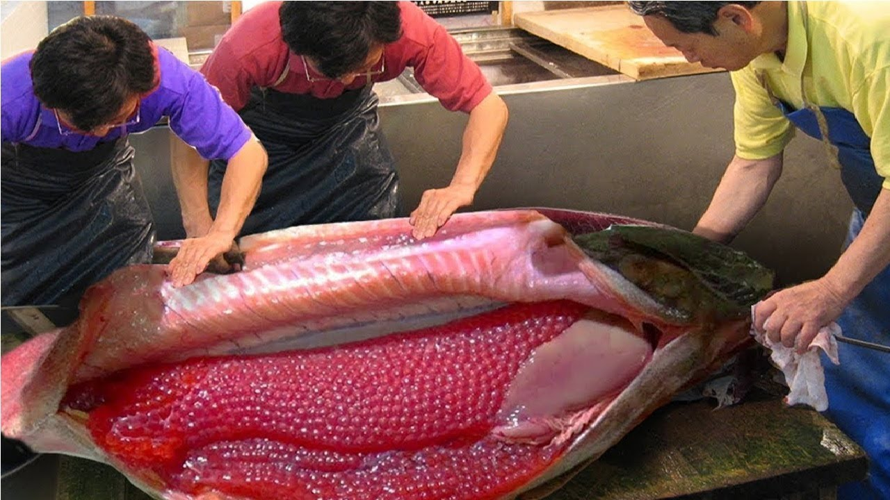 Awesome Worker Skills Harvest Salmon Eggs And Meat Salmon Cutting Processing Machine In Factory Youtube