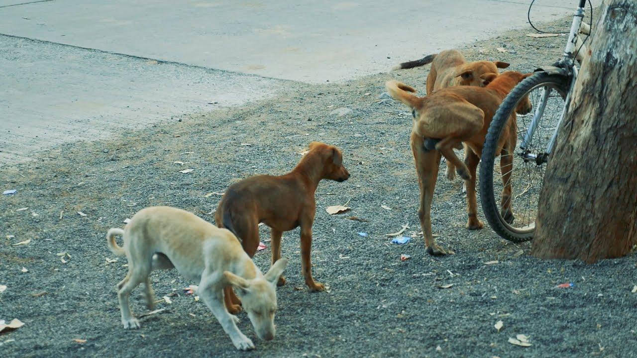 Indian Street Dog eating biscuits Stray Dogs india Dog Barking Kutta गली का  कुत्ता