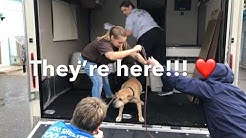 Animals moved from Jacksonville to Tampa ahead of Hurricane Dorian