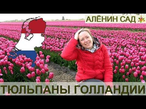СУПЕР ПАРК тюльпанов Кёкенхоф, Голландия