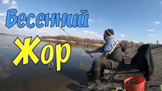Рыбалка супер! Бешеный клёв плотвы и густеры. Ловля на поплавок.