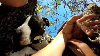 Rosie The Adventure Rescue Dog - Adopt Me