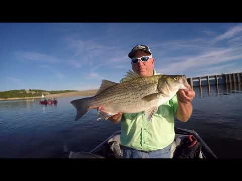 Truman Hybrid Fishing
