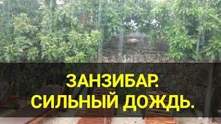 Занзибар 2021 Сильный тропический ливень в апреле Погода в сезон дождей Днем жара Канал Тутси