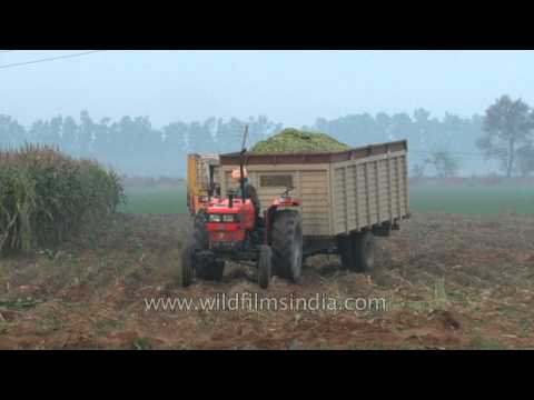 Forager chops crop waste into small pieces in a field in Punjab