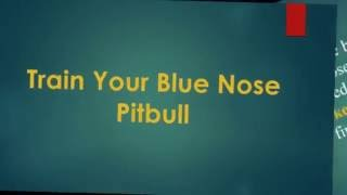 Train your blue nose pitbulls