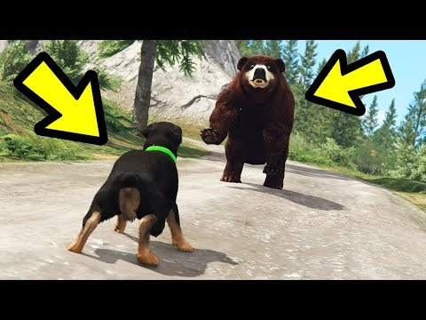 GTA 5 - Chop vs. Bear! (Who Wins?)