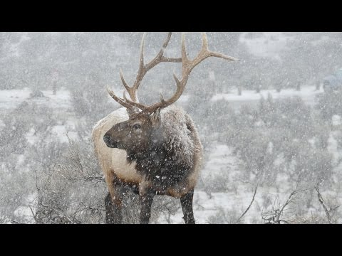Yellowstone in Snow