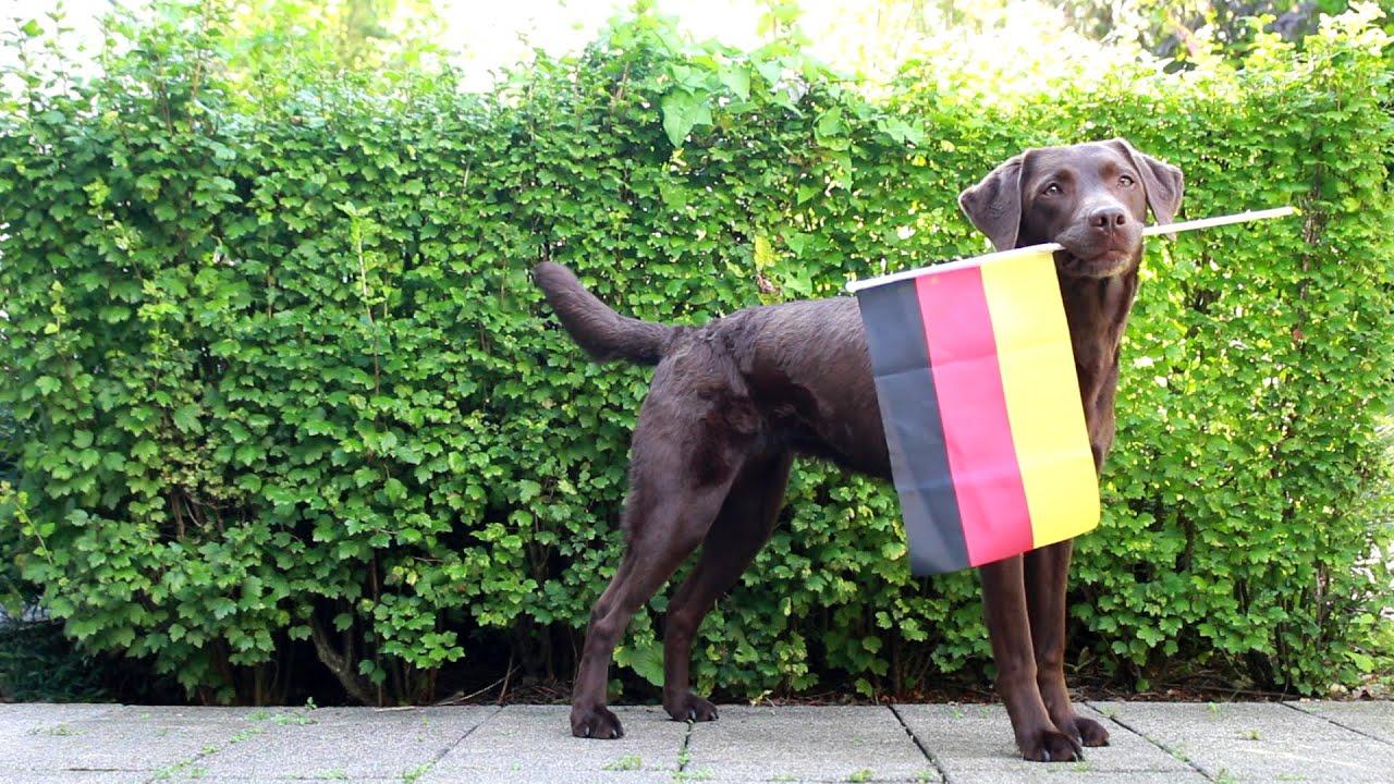 Em Viertelfinale Deutschland