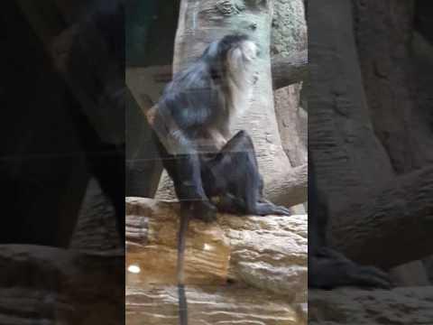 обезьяна показывыет попу и писюн картинка