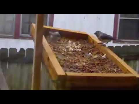 DIY Bird feeder big hit. First 10 Minutes.