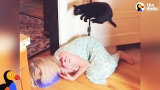 Cat Is Pretty Sure Kitchen Floor Is LAVA | The Dodo