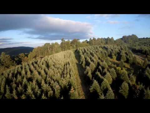 J&D Christmas Tree Farm Aerial footage