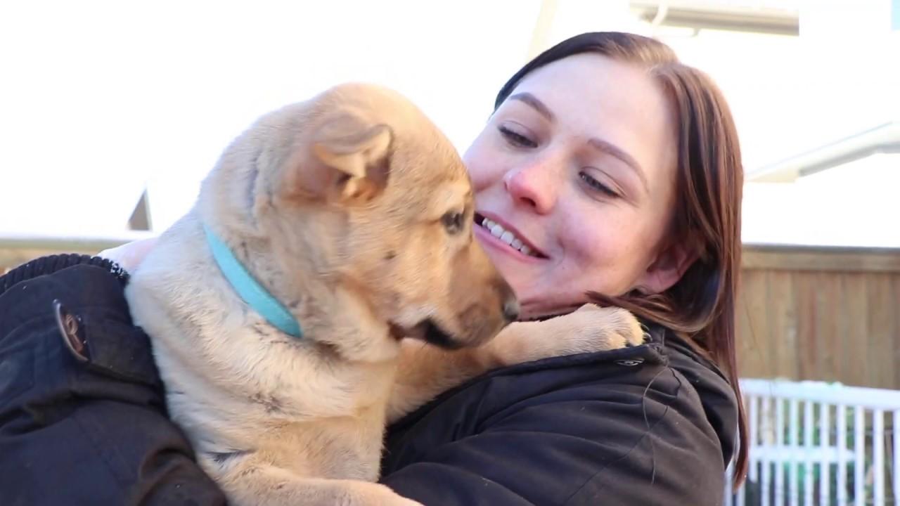 Apply for a Career at Calgary Humane Society
