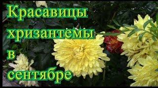 видео Заполнение дневника по практике - Образец