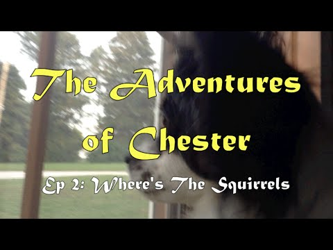 The Adventures of Chester Ep2: Where's The Squirrels? | Mesmerized Dog