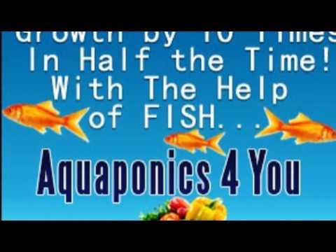 Aquaponics 4 You Review - Build Your Own Aquaponics System At Home | Aquaponics Aquaculture System