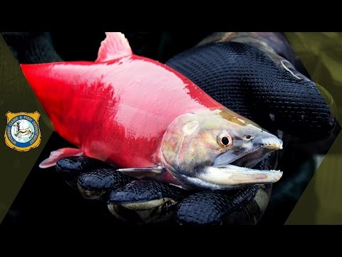 Fish Hatchery Documentary