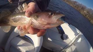 December Walleyes and Saugers Day 1