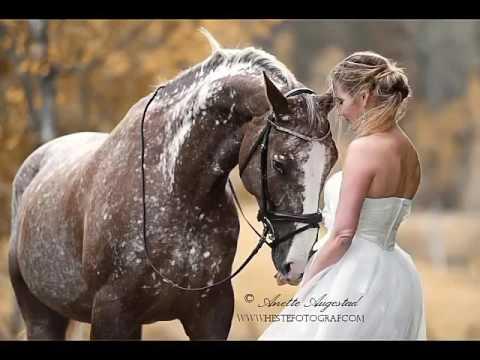 Картинки лошадей