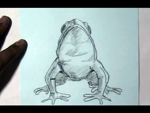 how to draw a cartoon frog video