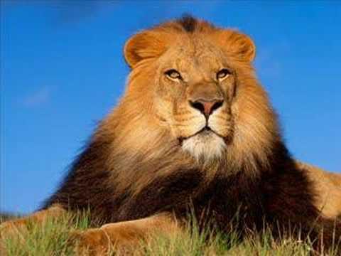 Image Animaux De La Jungle dans la jungle des animaux - youtube