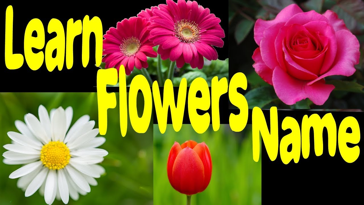 Learn Flowers Name And Image For Nursery Learn English Flower Names     Learn Flowers Name And Image For Nursery Learn English Flower Names Different  Types Of Flowers