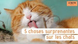 Cinq choses surprenantes sur les chats