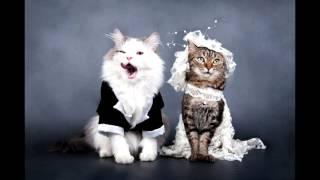 смешные кошки с костюмами на фото