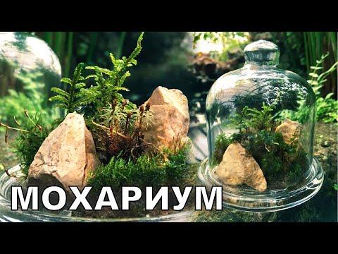 Мини-лес под колпаком. Флорариум своими руками. Популярная Ботаника