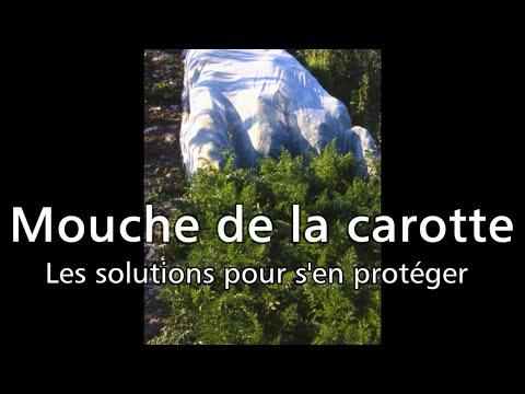 Les 4 saisons du jardin bio mouche de la carotte les solutions pour s 39 en prot ger youtube for Jardin 4 saisons albi