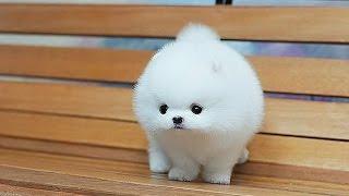 Топ 10 Лучших Собак Мира! | домашние животные фото видео