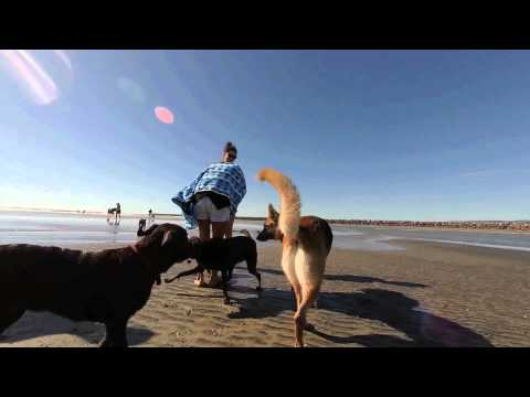 Ocean Beach, Dog Beach, San Diego's Dog Friendly Beach Destination