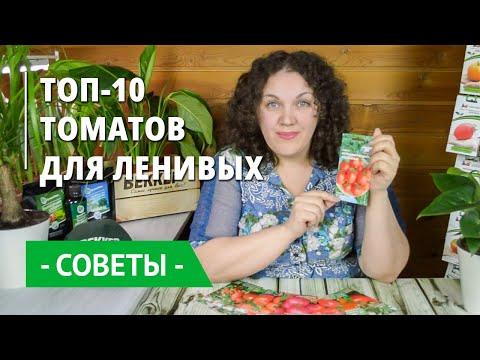 Непасынкующиеся томаты! Обзор лучших сортов для теплиц и открытого грунта
