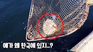 바다에서 이 해파리를 보면 도망가세요..