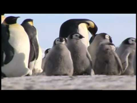Emperor Penguin Populations in Antarctica and Climate Change - Science Nation