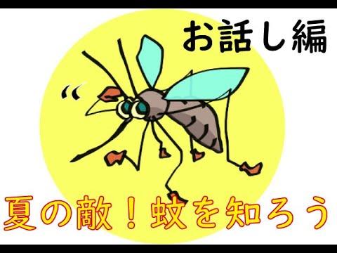 夏の敵!蚊を知ろう~お話し編~