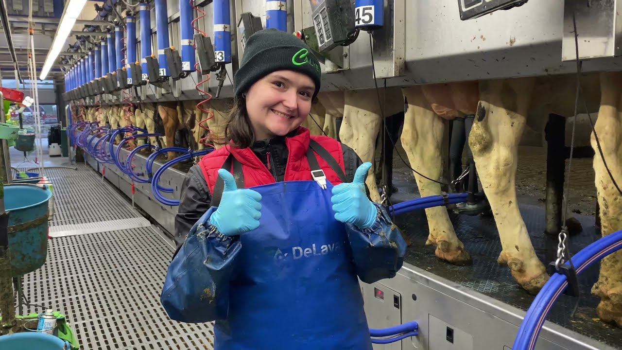 Incredible Snake Extreme Modern Farm #WithMe DIY Cow Farming Hay Milking Milk Feed Washing Cleaning