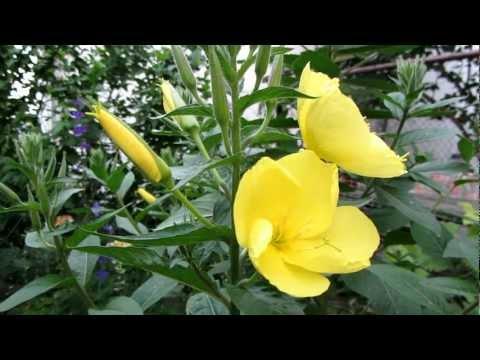 Каталог садовых растений и цветов по алфавиту с картинками