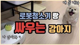 로봇청소기 vs 강아지 (feat.쎈척하는 겁쟁이)