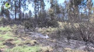 Incêndio no Monte da Ínsua na vila de Ponte obrigou à utilização dos meios aéreos