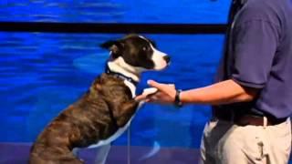 Shedd Aquarium Goes To The Dogs  Nbc Chicago 070213