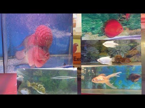 Flower Horn||Nemo Marine Fish|| Albino Gurami|| Exotic World|| Adarsh Nagar|| Hobby|| MMSVLoG #4