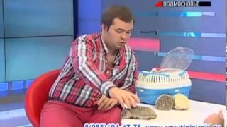 видео Шоу дрессированных ёжиков