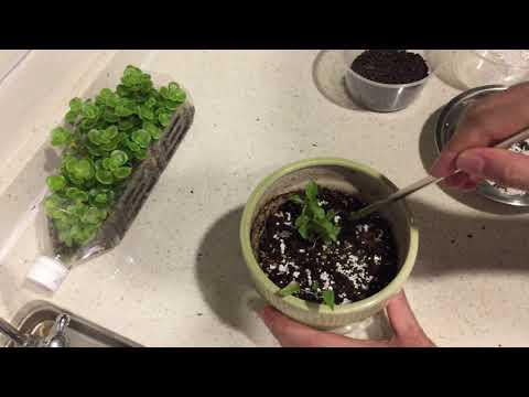 Vinson 任何植物和花 l 蛋殼肥料 自製肥料【Vinson Garden 講花經】 - YouTube